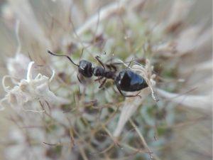Hablemos de hormigas…