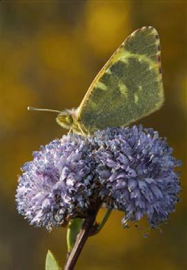 Los ciudadanos, la ciencia y las mariposas.